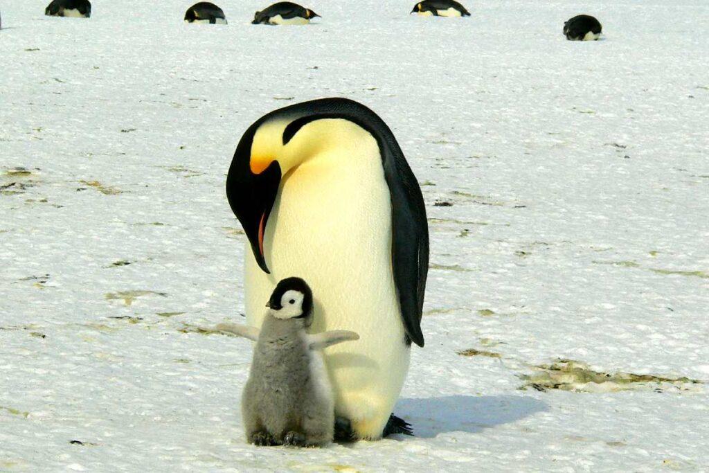 Viajar a la Antártica